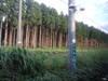 090910_11maiko_aomori_086