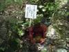 110723inuyama_komaki_8